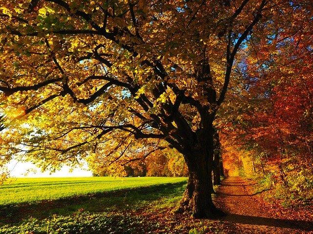 Fit für den Herbst sein - Unsere 5 besten Tipps