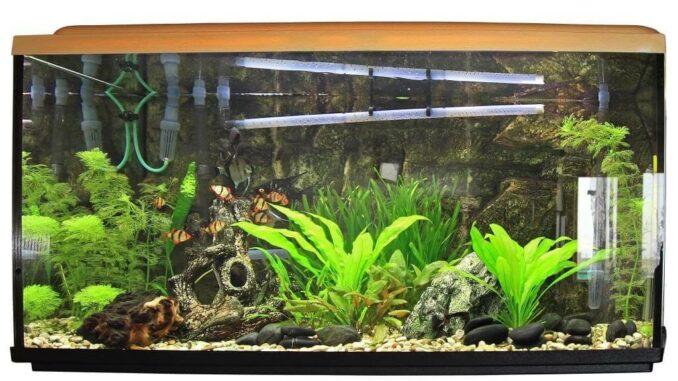 Aquarium - Mehr als nur ein Hobby 1
