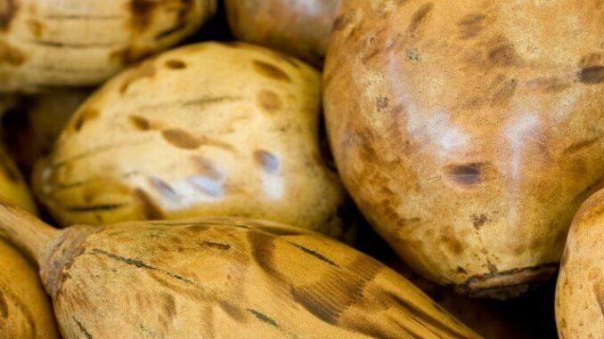 Warum wir unseren Baobab-Konsum überdenken sollten