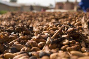Was den Kakao als Superfood qualifiziert