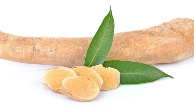 Tongkat Ali - Eurycoma longifolia