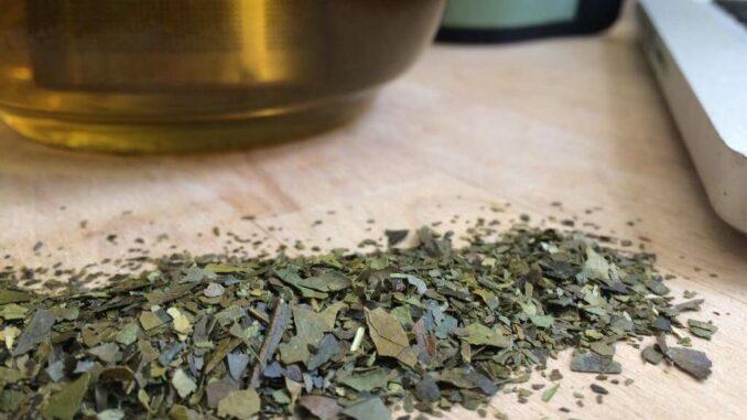 Guayusa Teeblätter