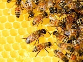 Honig als Superfood: Vorteile & Nachteile