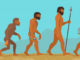 Primaten: Affen – unsere tierischen Verwandten