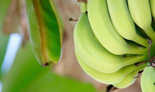 Bananenmehl als neues Superfood entdeckt