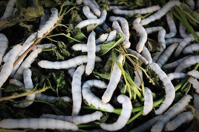 Insekten als Superfood: Neue Erkenntnisse
