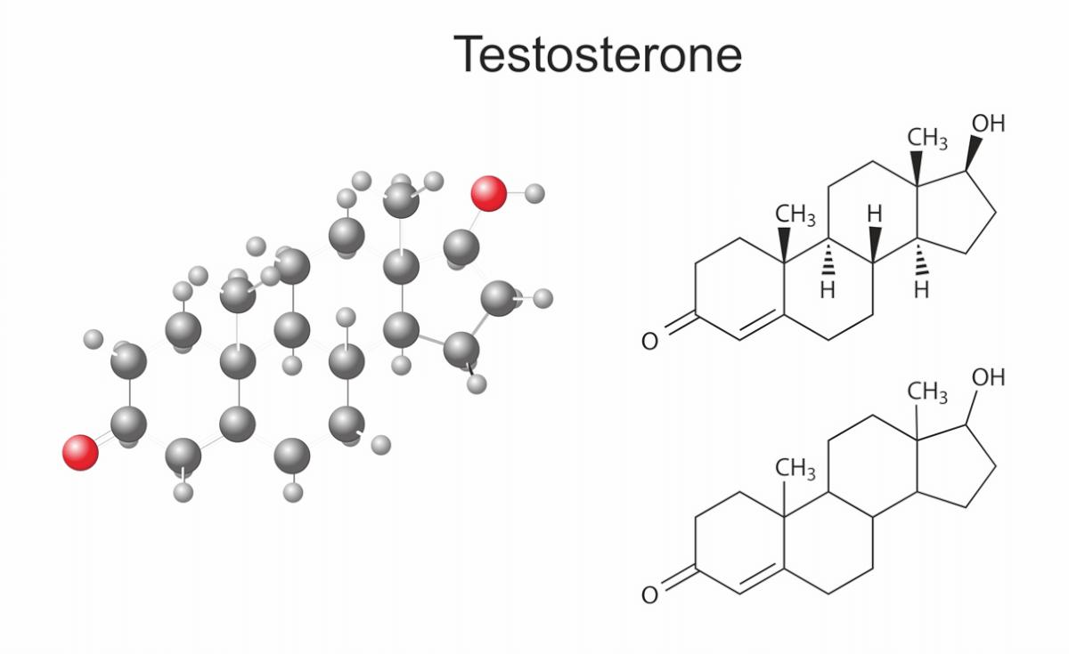 Schaubild der Zusammensetzung von Testosteron