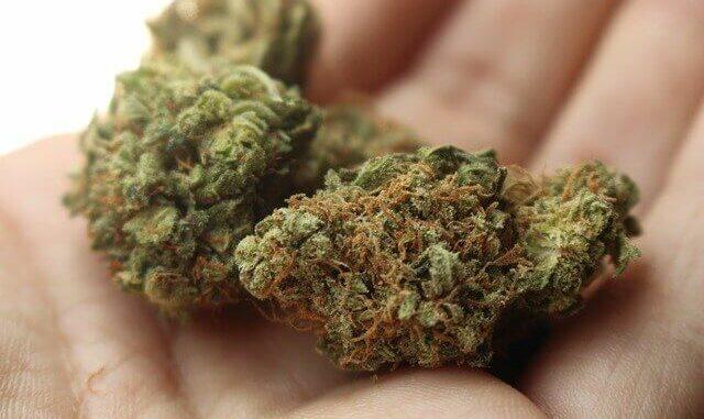 Deutsche Cannabis-Firmen erhalten Branchenverband